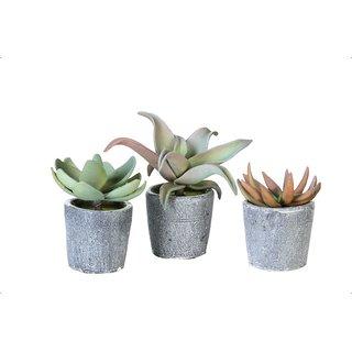 Deko Pflanzen Lifestyle Kreativ Schenken Und Wohnen Mit Skulpturen